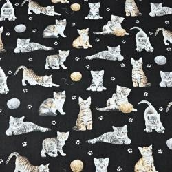 kotki beżowo-białe na czarnym tle