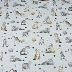 Kotki beżowo-białe na jasno szarym tle