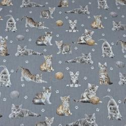 Kotki beżowo-białe na ciemno szarym tle