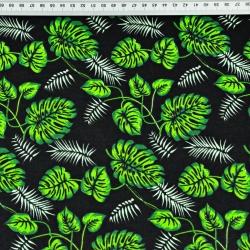 Liście monstera małe zielone na czarnym tle
